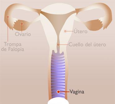 VAGINA - interno