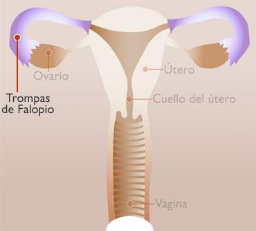 TROMPAS DE FALOPIO - interno