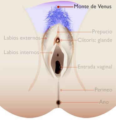 MONTE DE VENUS - externo